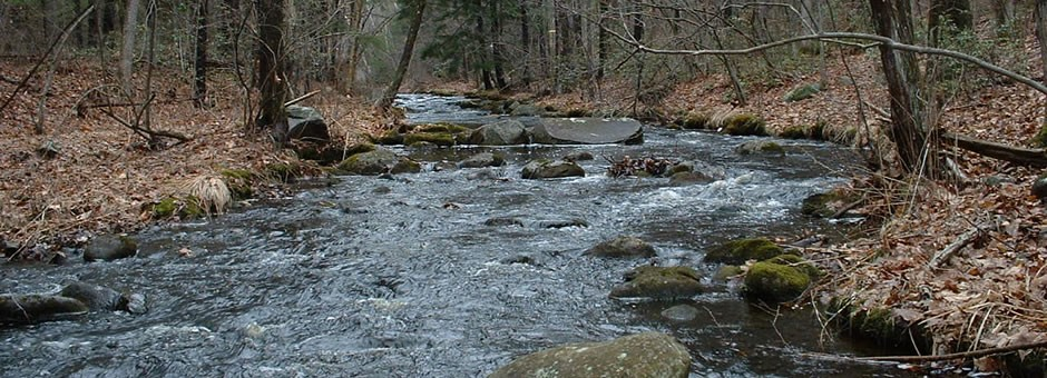 Healthy streams depend on watersheds to filter pollutants...